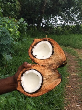 opened coconut
