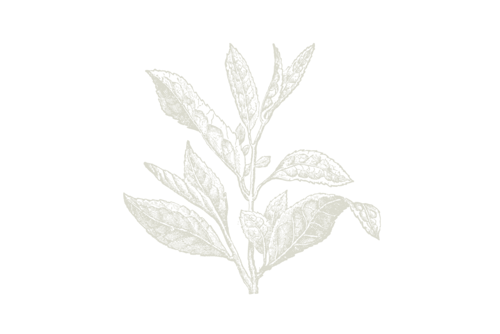 30-Keyes-Flower_1200x800.png