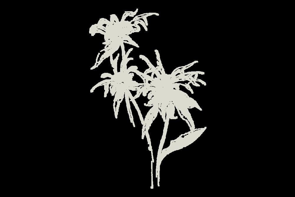 30-Keyes-Flower_5_1200x800.png