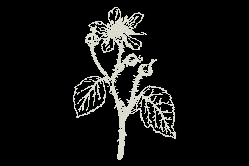 30-Keyes-Flower_6_1200x800.png