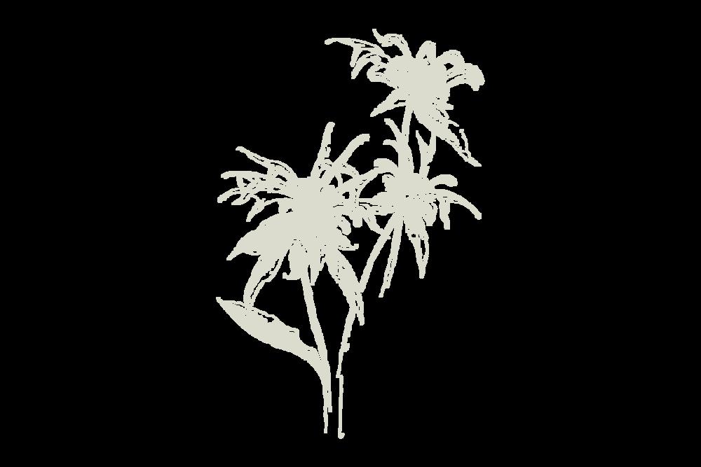30Keyes_Botanicals_UnitTypes_Demi_20180831.png