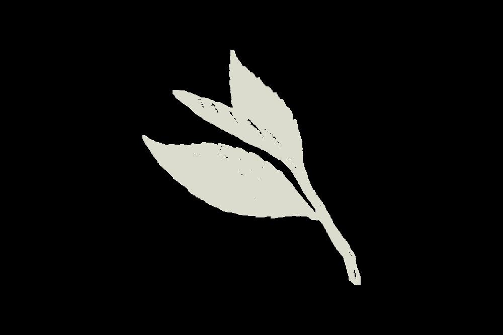30Keyes_Botanicals_UnitTypes_Duo-Courtyard_20180831.png