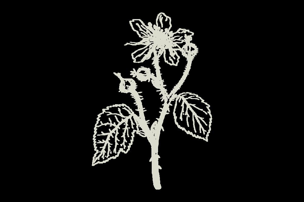 30Keyes_Botanicals_UnitTypes_Edition_20180831.png