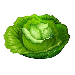 Cabbage300.jpg