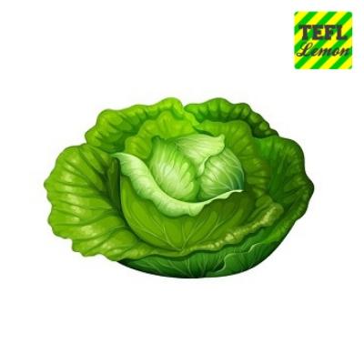 Cabbage 400.jpg