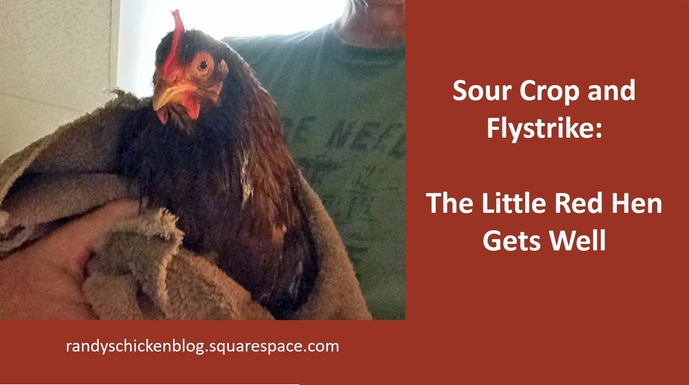 Sour Crop and Flystrike: The Little Red Hen Gets Well