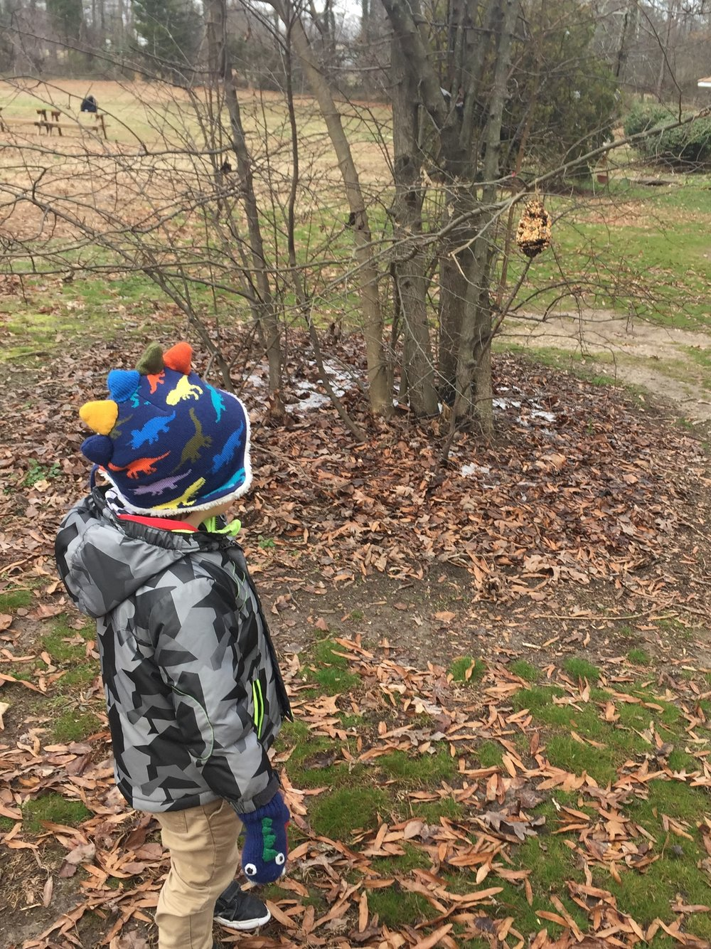 Students tend to the refilling of the bird feeders and even make their own out of pine cones to nourish our creatures with whom we share a habitat.Often, children will request to bring out binoculars to seek out our feathered friends. -