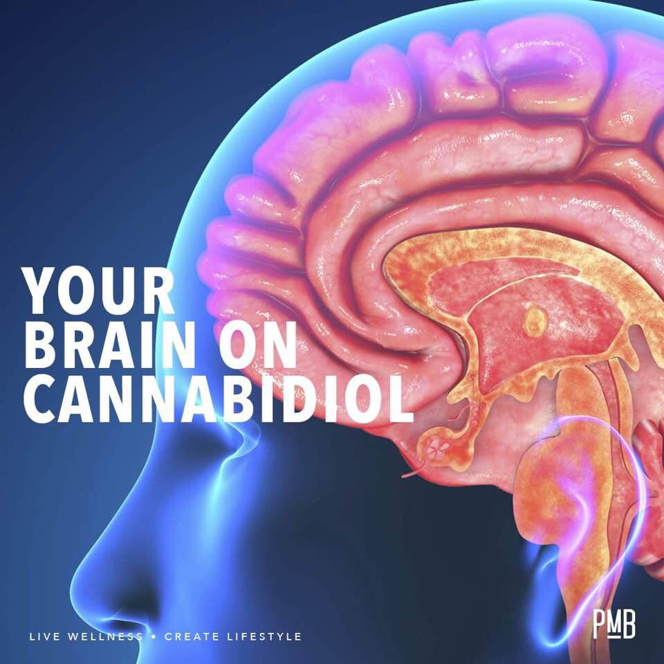 brainoncannabidiol.jpg