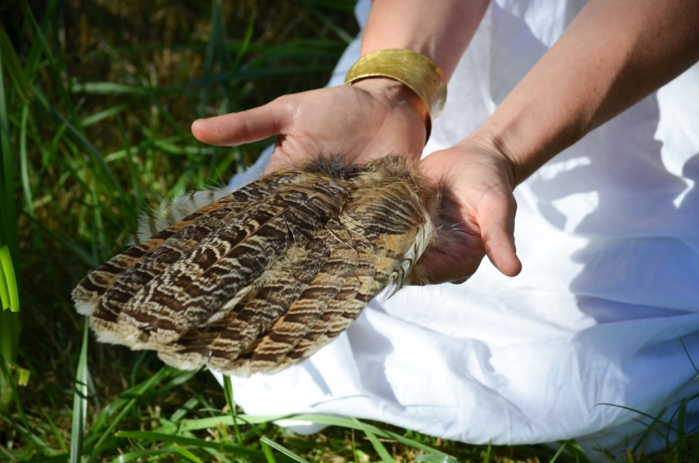 feathers-min.jpg