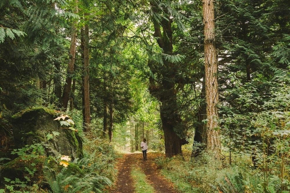forest+path-min.jpg