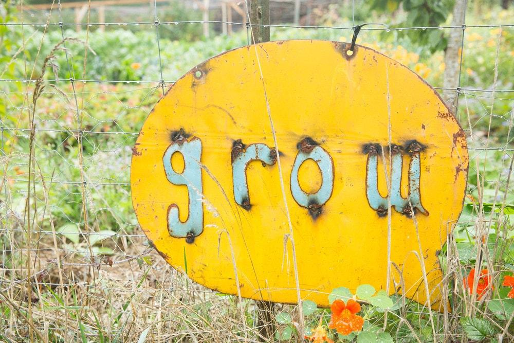 grow-min.jpg