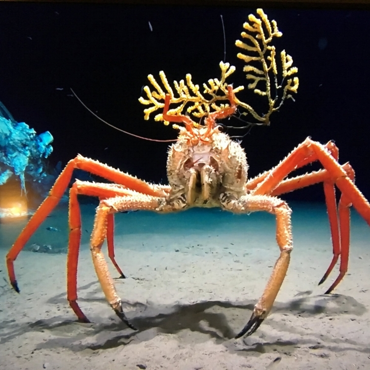Photo taken of a still from and episode of Blue Planet 2. I have a new appreciation for crabs.