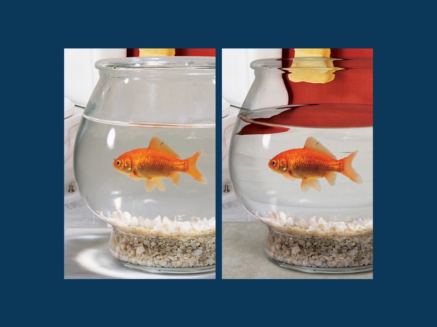 Fish-Bowl.jpg