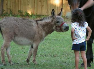 Delilah the Donkey