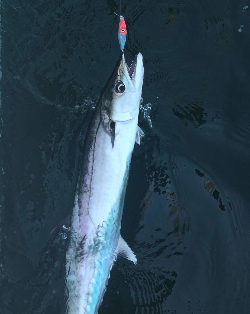 King Mackerel 3 oz Fluorescent Pink Glow. RHB