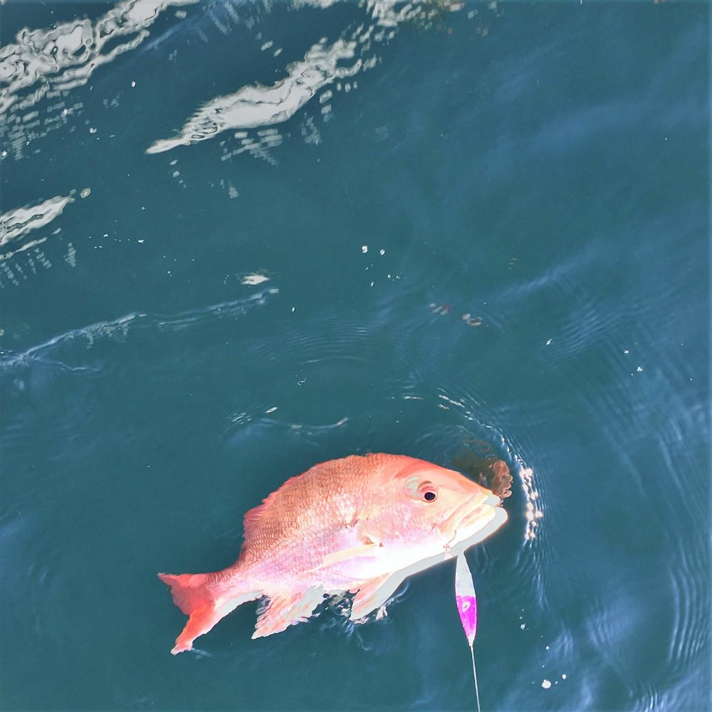 "Red Snapper 3 oz Pink Glow ""Awesome Lure. Fished 3 separate days with quality snapper and trigger almost each drop. Some times they hit the jig dead in the water moving back to the spot. One grouper. There were some nicks and tears in the cover, but still productive. Finally cut off probably by a king."" Steve Suggs MD"