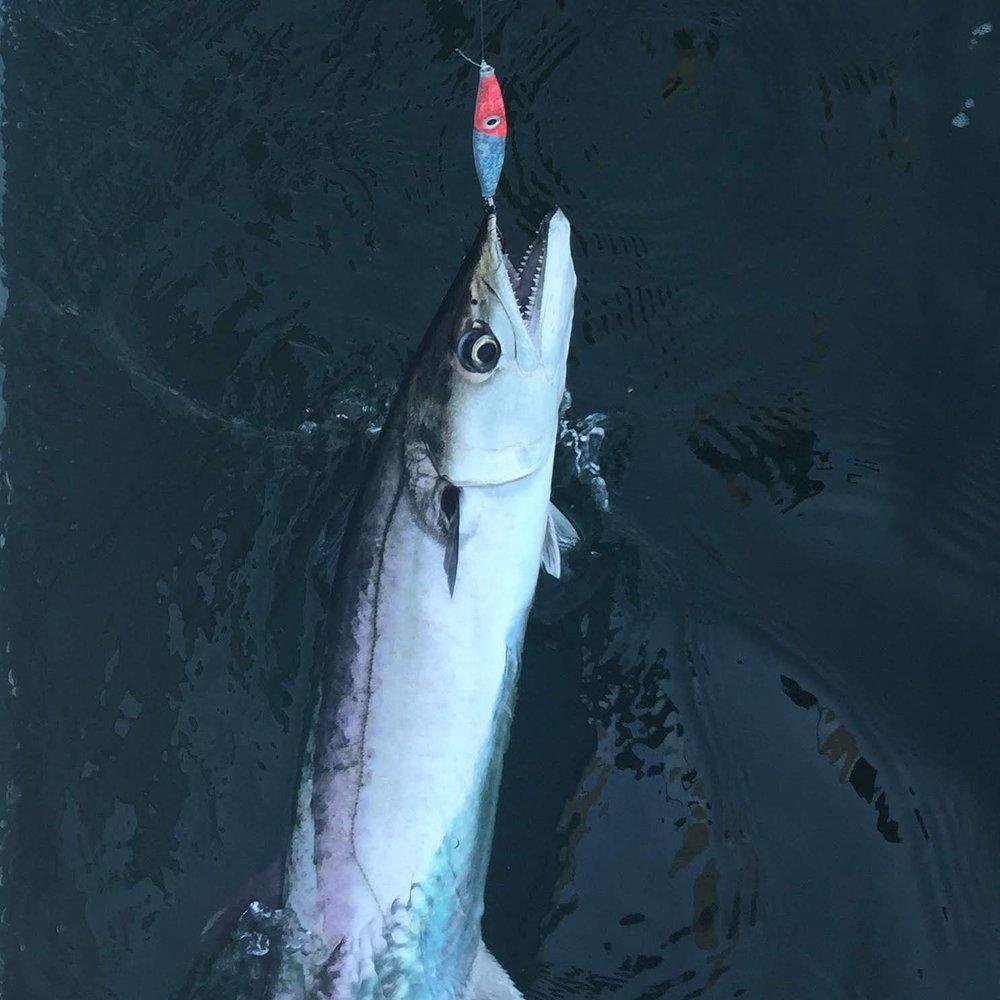 King Mackerel 3 oz FP Glow.jpg