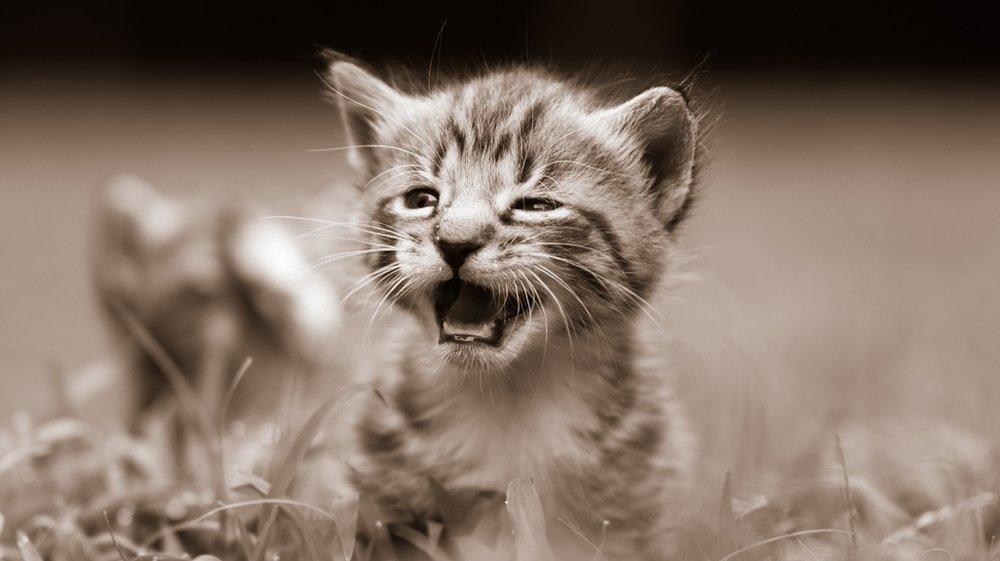 stockvault-curious-kitty138141.jpg