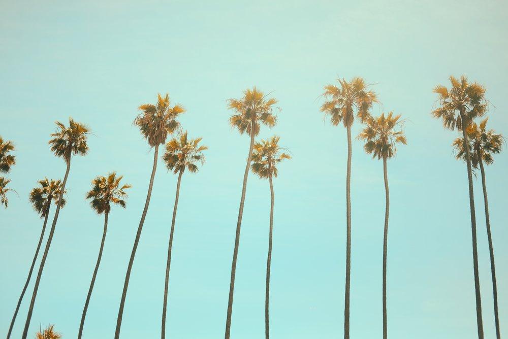 palms-unsplash.jpg