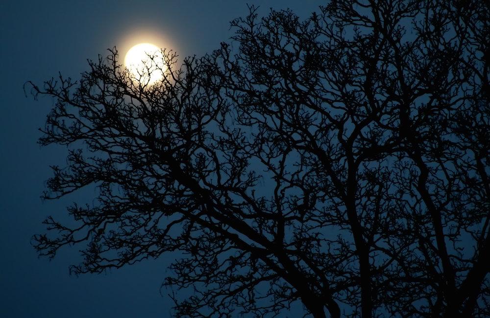 måne 1_edited-1.jpg