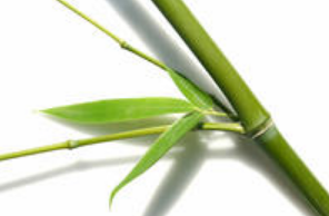 Douglas Pullin Banner bambo.PNG