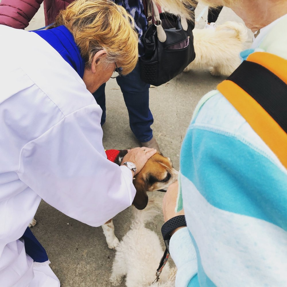 Dianne blessing the dogs