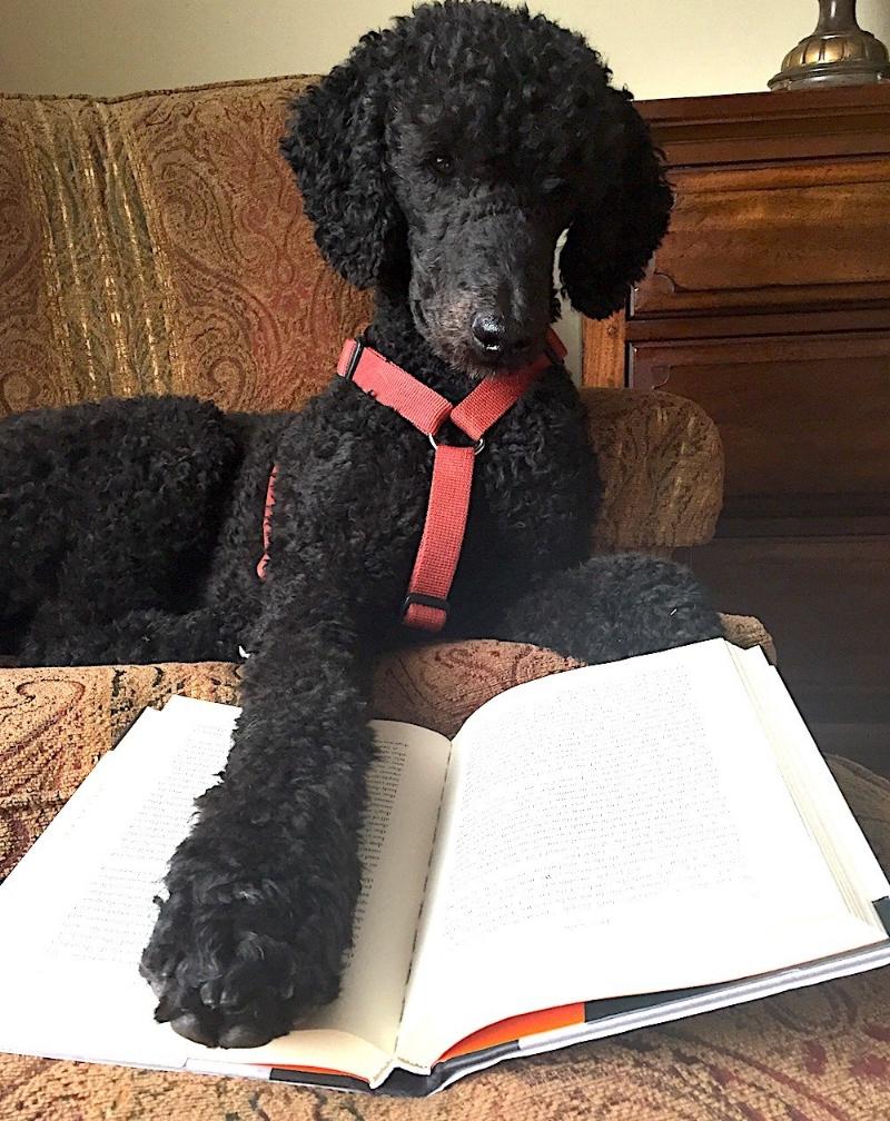 dog-training-seminar-event-planner.jpg