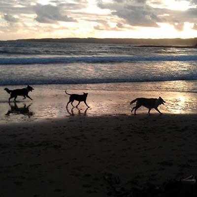 Dogs_outline_SQ.jpg
