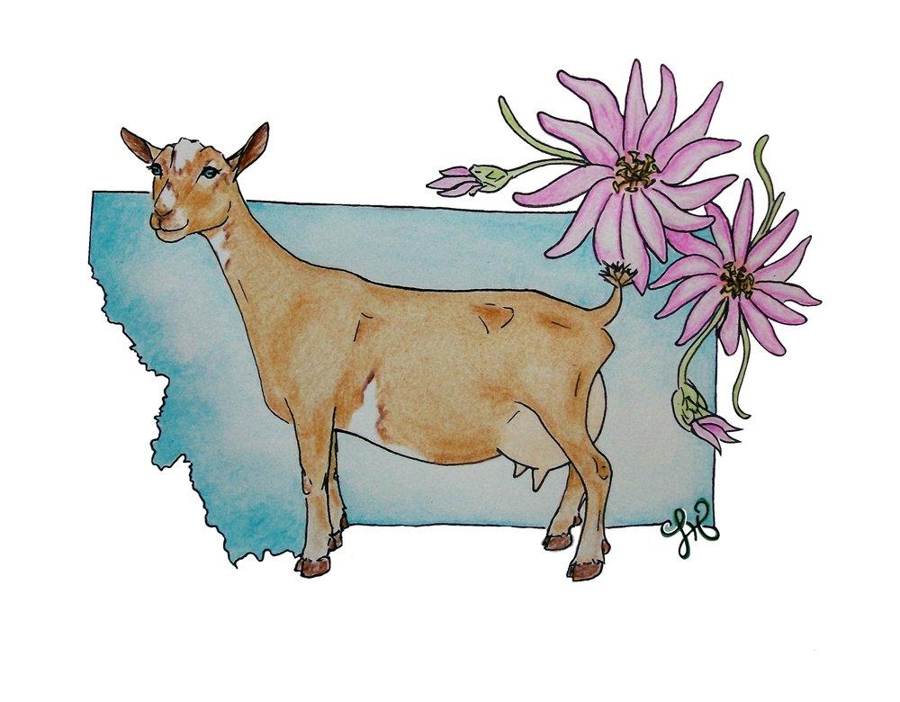 Coyote Kidz Logo.jpg