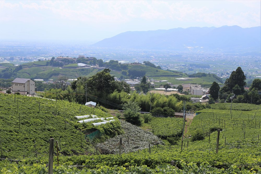 Koshu Valley_Japanese Wine Region_Summer valley view.JPG