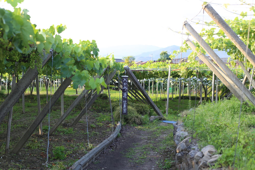Koshu Valley_Japanese Wine Region_Vineyard Path.JPG
