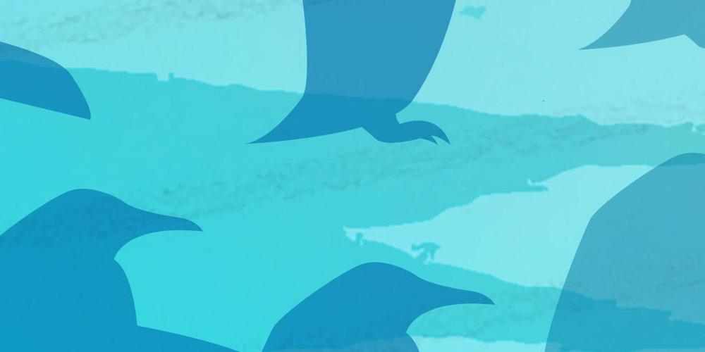 Pingvin 5.jpeg