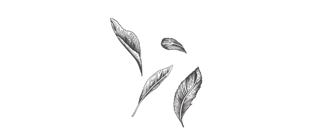 leaves-image.png
