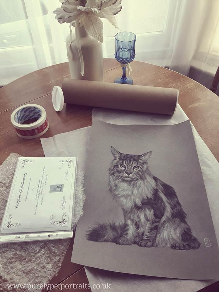cat-packaging.jpg