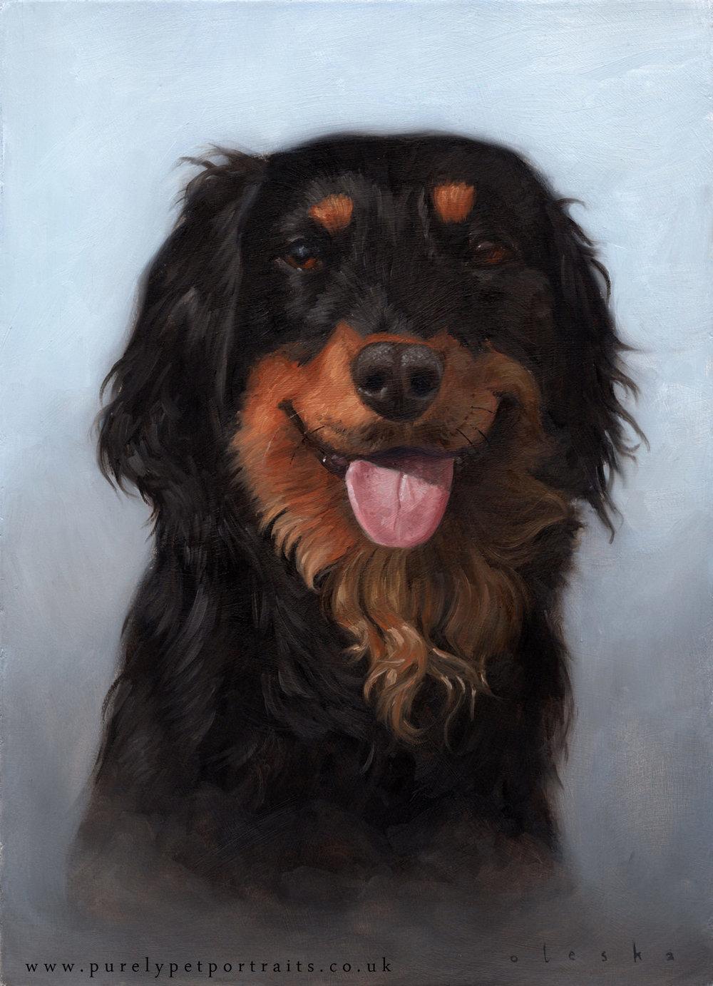 dog-portrat-of-kelly.jpg