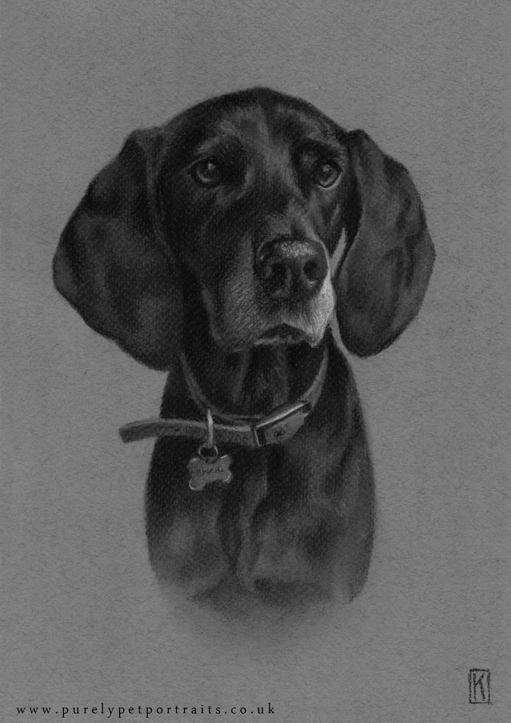 Portrait of Binker. A4 charcoal drawing on grey tinted paper.