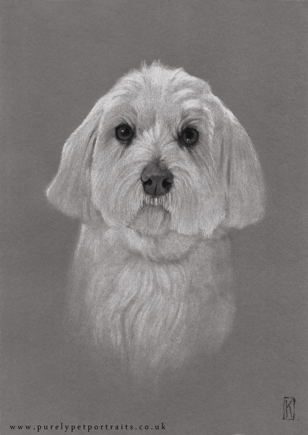 Portrait of Daisy by www.purelypetportraits.co.uk