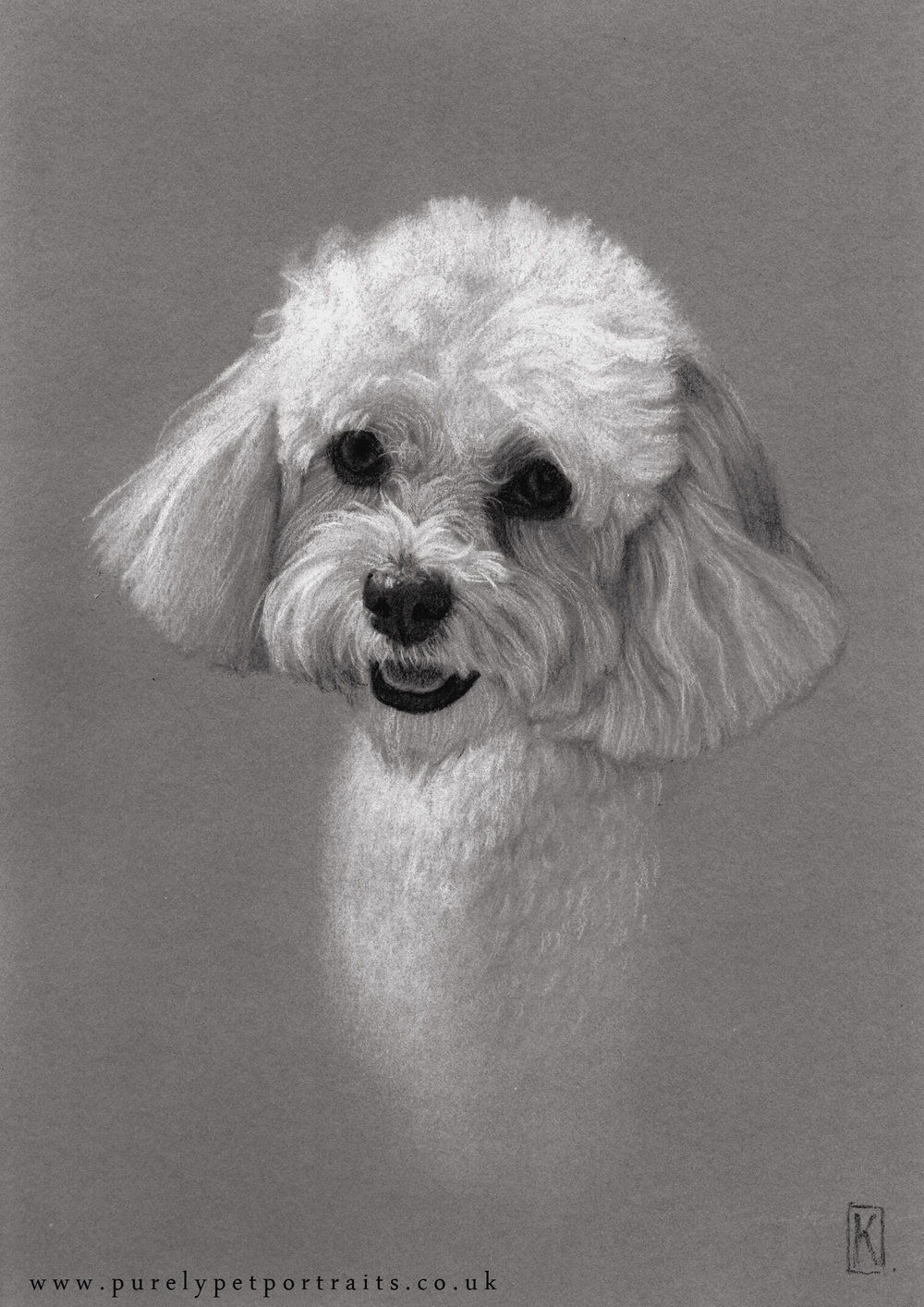 Portrait of Cookie by www.purelypetportraits.co.uk