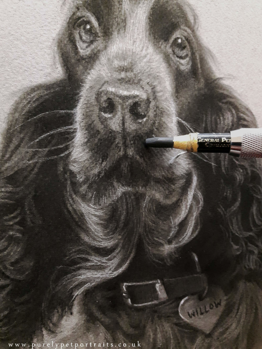 WIllow portrait in progress by www.purelypetportraits.co.uk