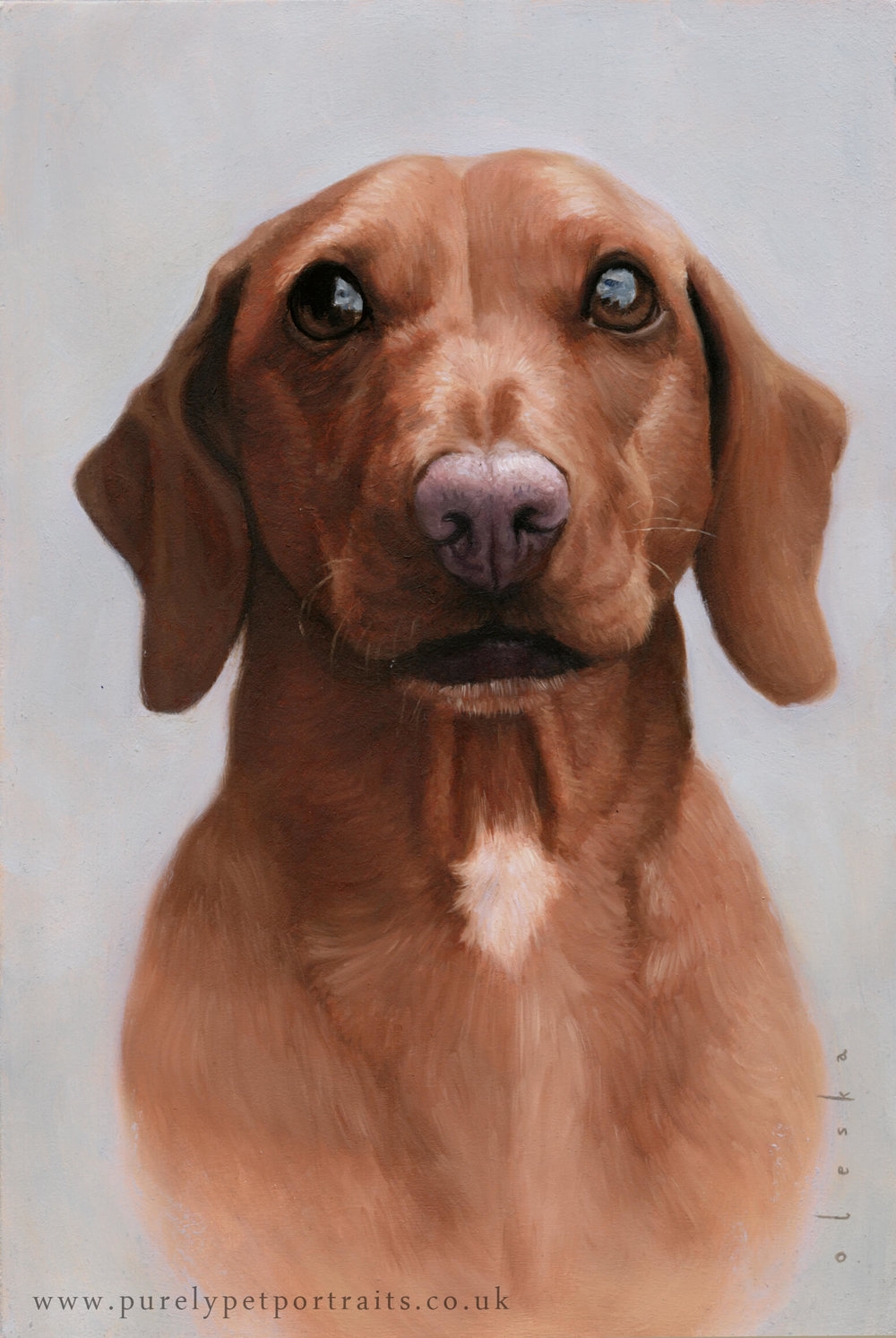 Pet portrait of Barnaby