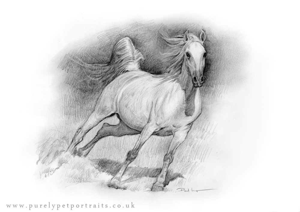 horse galloping.jpg