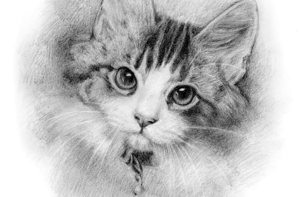 Pencil Gallery - from £120
