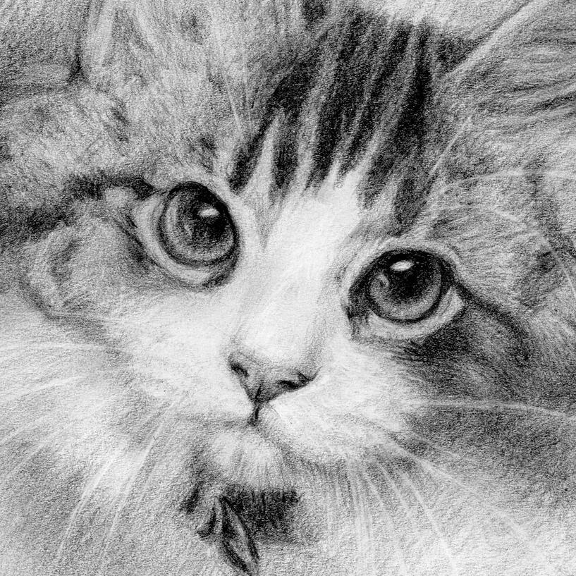 kitten-paralax.JPG