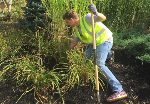 NEP volunteer Chris pulls weeds and clears overgrowth.