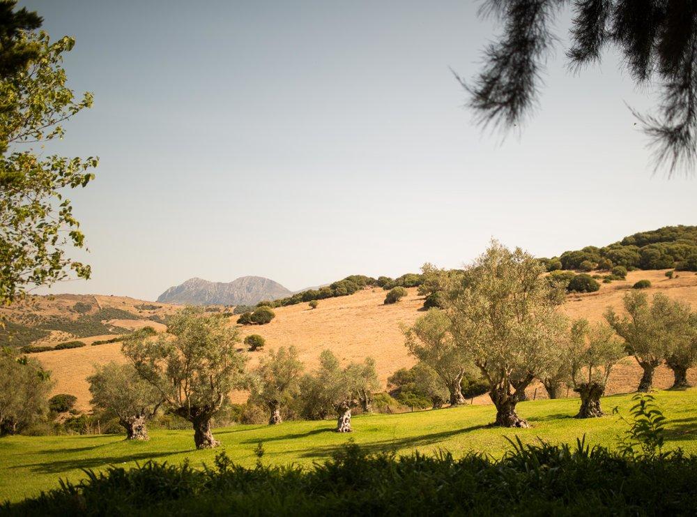 Experience-retreats-Yoga-retreat-fitness-retreats-Andalucia-Views2.JPG