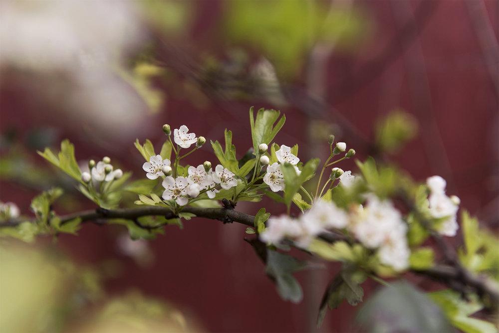 March16_gardenrec_10edit.jpg