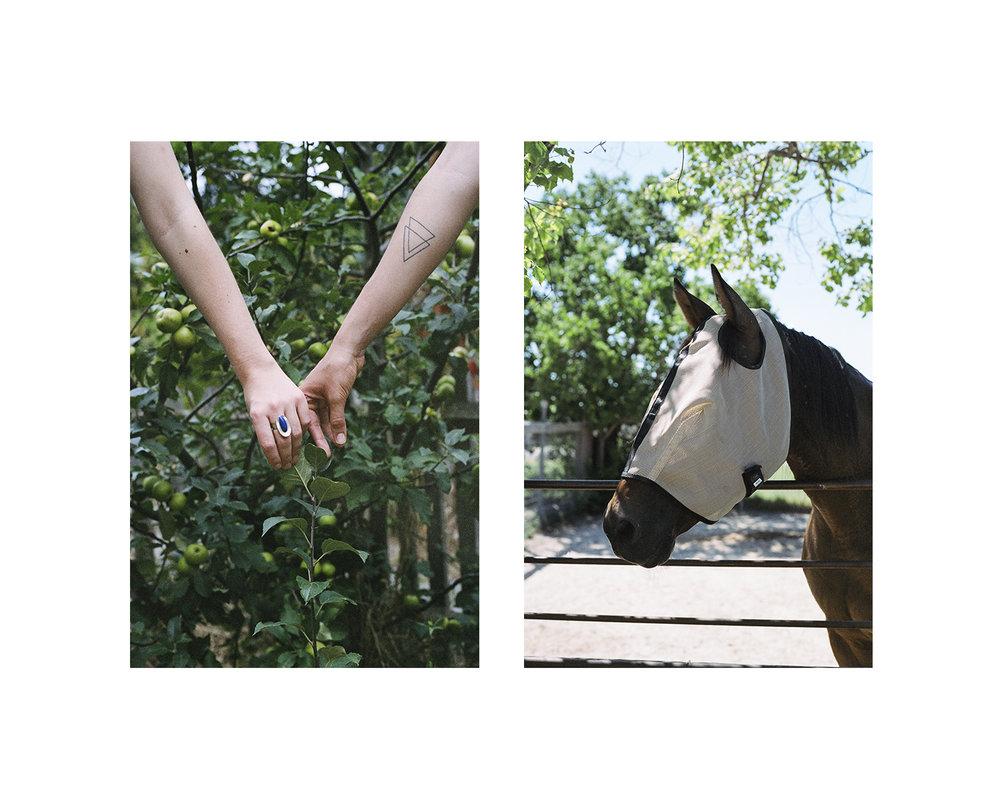 horseappletree_21x17.jpg