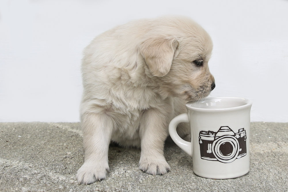 website pup camera (1 of 1).jpg