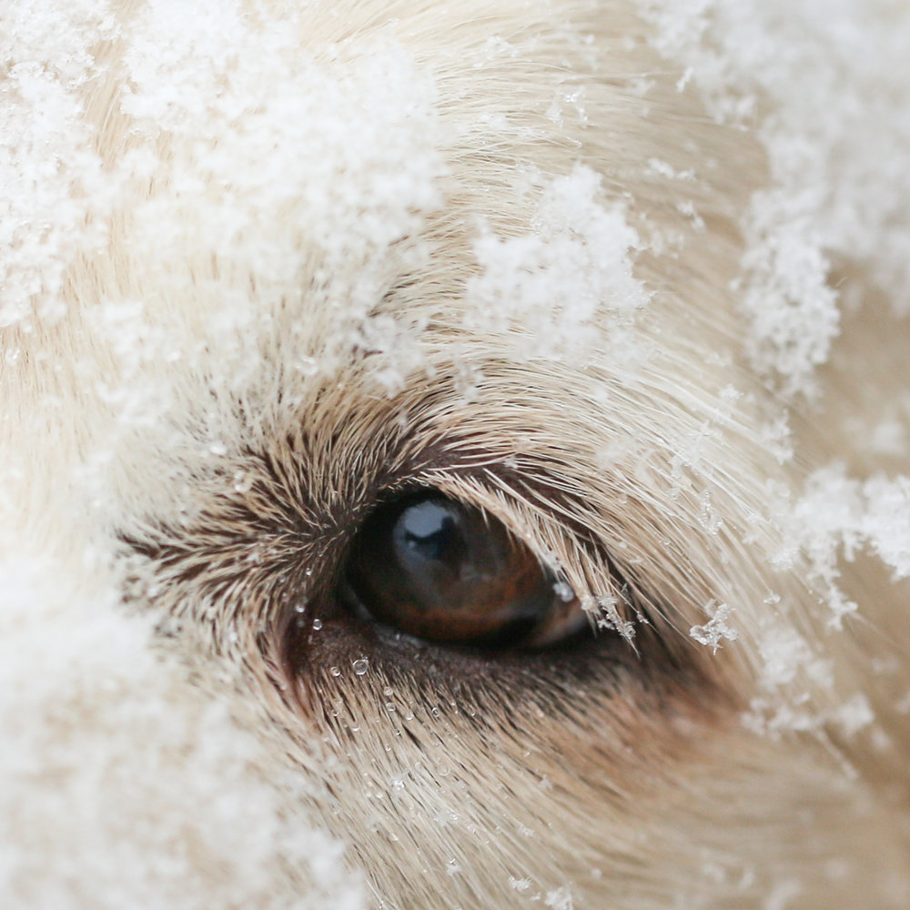 eye snow2 (1 of 1).jpg