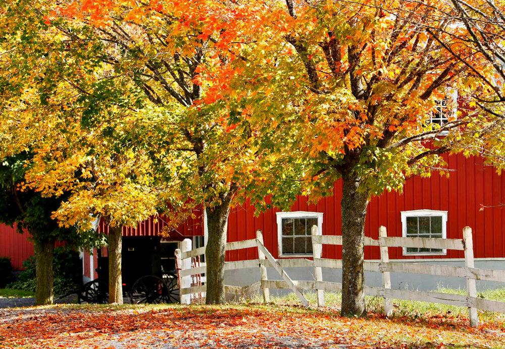 fall-foliage-penn-yan-ny-5181c5d24863cf47.jpg